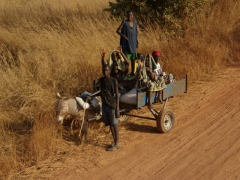 Passing by a donkey cartful of friendly Malians