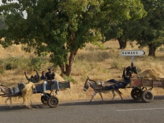 Donkey carts heading away from Bamako