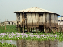 The purple water lilies growing just beneath the stilt homes in Ganvie make for a picturesque image