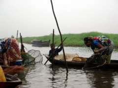 A lady checks her fish traps with a baby strapped to her back