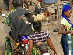Lady selling chickens on the roadside near Ganvie Lake Village