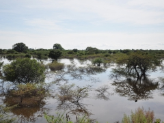 Wetlands around Ondjiva