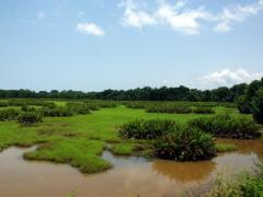 Landscape near Cabinda