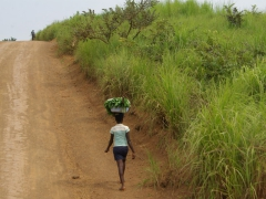 An Angolan girl carries a bucket of greenery atop her head