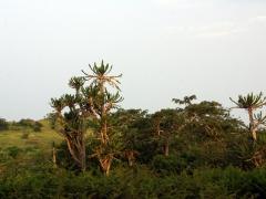 Landscape near Ambriz