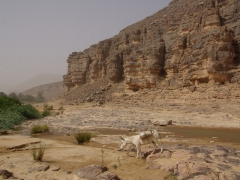 The donkey (laden with dates) knew exactly how to get back to Ihrir on its own, so our group followed it back