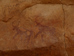Horned cows; Tilalen cave painting