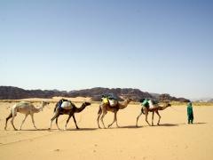 Tuareg camel herder; Tilalen