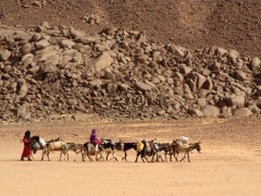 Nomadic girls guiding their donkeys across the Sahara