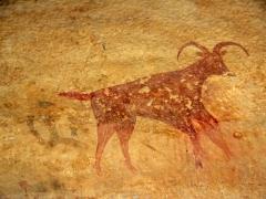 Mouflon (feral sheep); Jabbaren