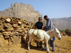 Our new friends in Ihrir load their donkey with a bagful of dates