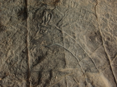 Giraffe engraving; Dider rock art