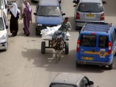 A donkey cart driver halts traffic; El Oued
