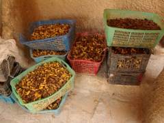 Several varieties of dates for sale; El Atteuf