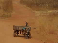 Donkey cart transport