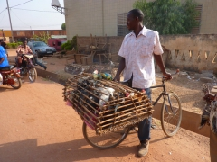 Transporting chickens on a bike; Banfora