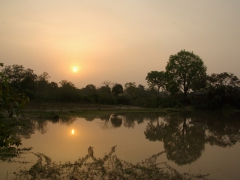 Sunset over a watering hole; Mole National Park