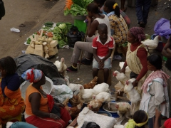Live chickens for sale; Kumasi market