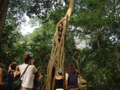 The more adventurous boys of our group climbed a nearby ficus tree at the Boabeng-Fiema monkey sanctuary