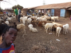 A cheeky girl sticks her tongue out while we snap a shot of the livestock market in Tamale