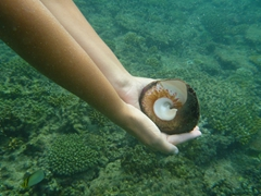 Finding a conch shell while snorkeling off Nacula Island