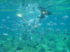 Robby swarmed by fish while snorkeling around Bounty Island
