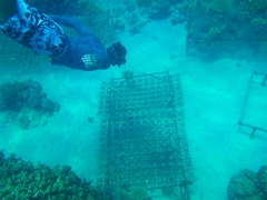 Checking out the coral farm at Bounty Island