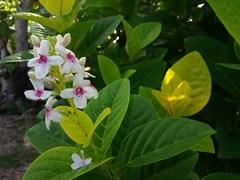 Pretty flowers; Bounty Island Resort