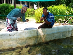 Placing clean turtles back into the turtle pond; Bounty Island Resort