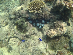 Black and white banded sea snake - highly venemous so we kept our distance!