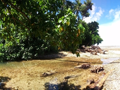 Panorama of the view on our Lavena Coastal Walk