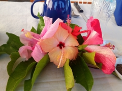 Hibiscus flower decoration at our breakfast table