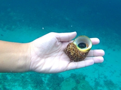 Admiring a pretty sea snail at Siga Siga - the rule of thumb is to never take an inhabited shell!