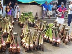 Taro for sale; Savusavu Market
