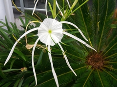 White flower at the Pearl Hotel