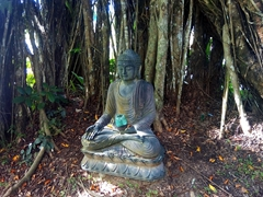 A serene spot nestled in a banyan tree; near Baka Blues Cafe in Pacific Harbour