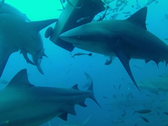 Despite our close proximity to dozens of hungry apex predators (bull sharks), the BAD boys ensure that we come to no harm