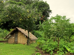 A typical dwelling on Pentecost Island (notice the grapefruit and papaya trees nearby)