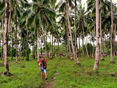 It's a leisurely walk through a coconut plantation