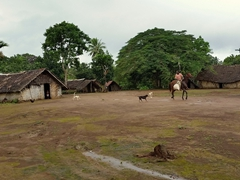 Horseback rider getting chased by village dogs; Wambel Village