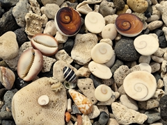 Pretty sea shells by the sea shore