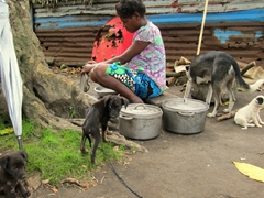 Ni-Vanuatu woman cleaning pots while surrounded by village dogs
