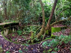 Fighting positions hidden by the jungle; WWII Heritage Trail hike