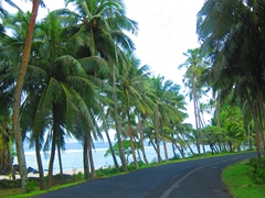 With so many coconut trees lining the road in American Samoa, it is amazing that you never hear of people or cars getting hit by rogue coconuts!