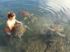 Scrubbing algae off a green turtle