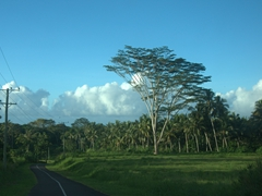 Its a beautiful drive around Savai'i but we wish we had allowed 2 days for our journey instead of 1 super rushed day