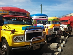 Colorful public buses at the Salelologa wharf
