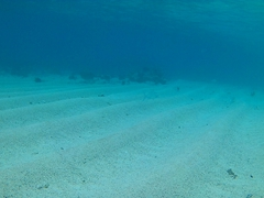 Snorkeling off Lalomanu beach is mediocre. There are some fish and coral beyond this sandy zone
