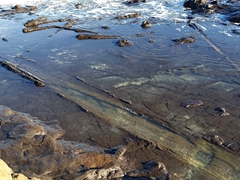 180 million year old petrified forest; Curio Bay