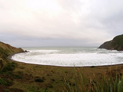 Roaring Bay, home to the elusive yellow eyed penguin